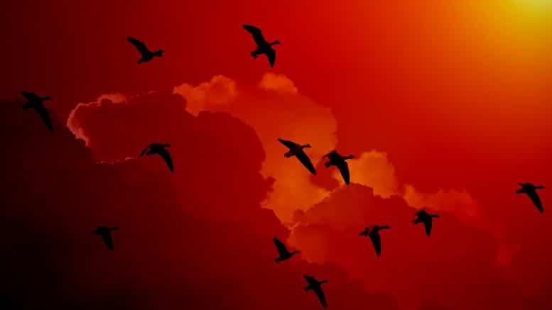 pajaros volando
