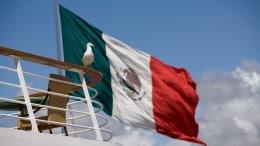 Ave con la bandera de Mexico de fondo