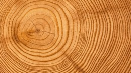 textura madera concentrica